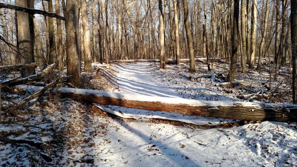 Fallen tree across the trail