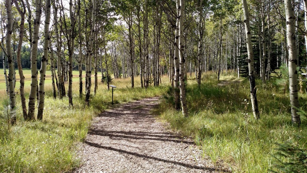 Aspen trees lining the path at Pathways Spiritual Sanctuary