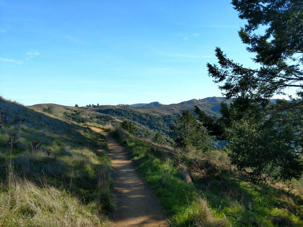 Hiking in Muir Woods