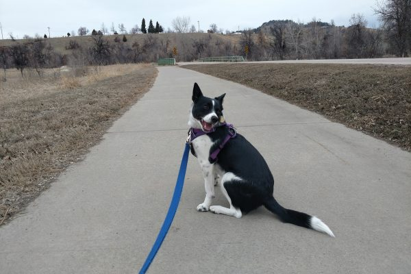 Inkling on leash during a walk