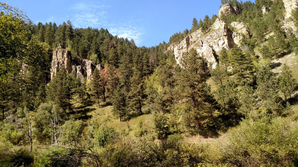 View from the Roughlock Falls Nature Trail
