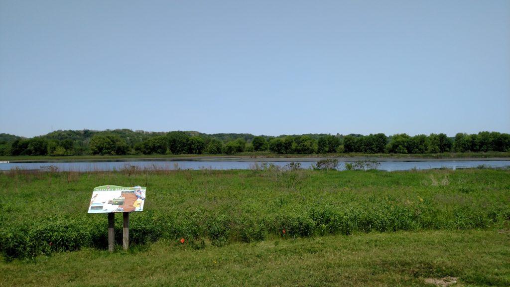 The wetland at Nahant Marsh
