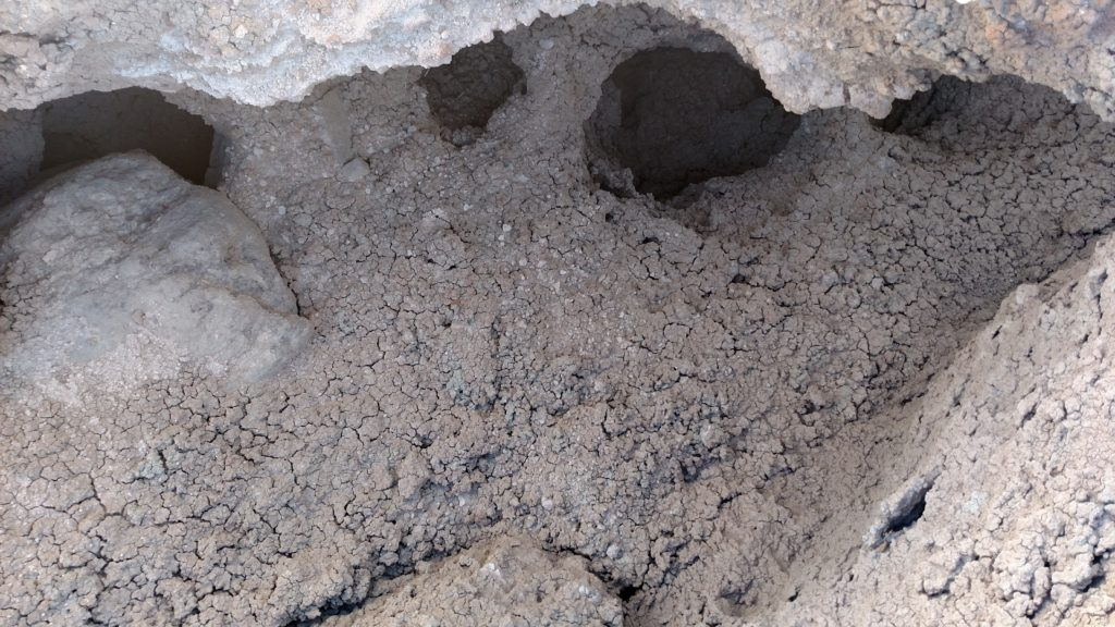 Soil on the trail