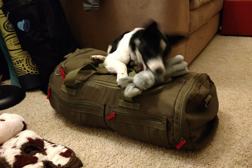 Dog on duffel bag