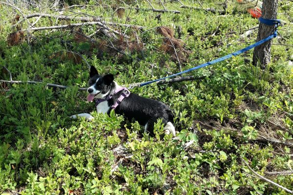 How to deal with ticks on an outdoorsy dog