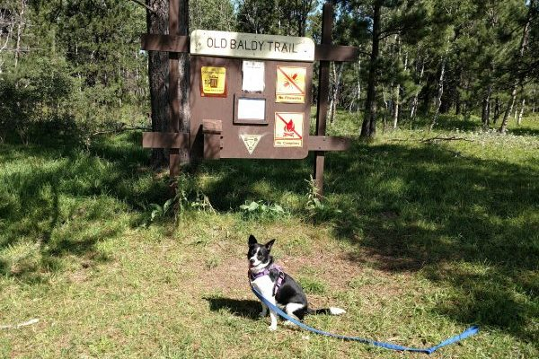 Inkling is ready to get moving on Old Baldy Trail