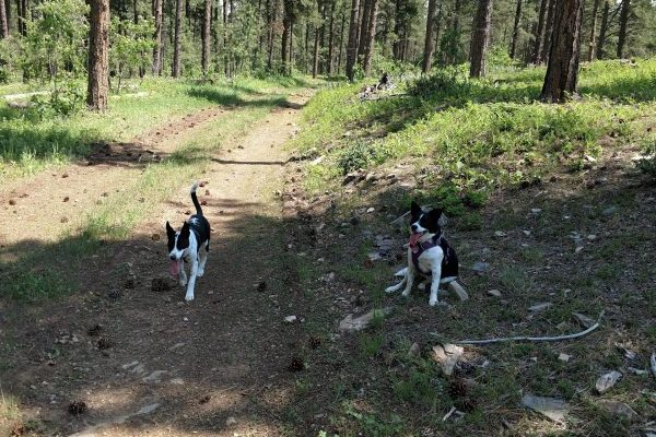 Dogs stay cool on the trail by taking breaks in the shade