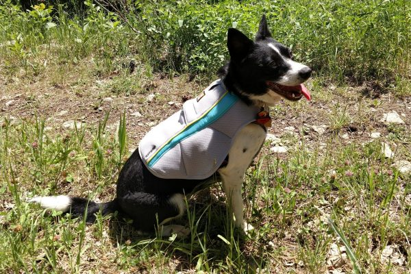 Inkling in her Swamp Cooler Cooling Vest from Ruffwear